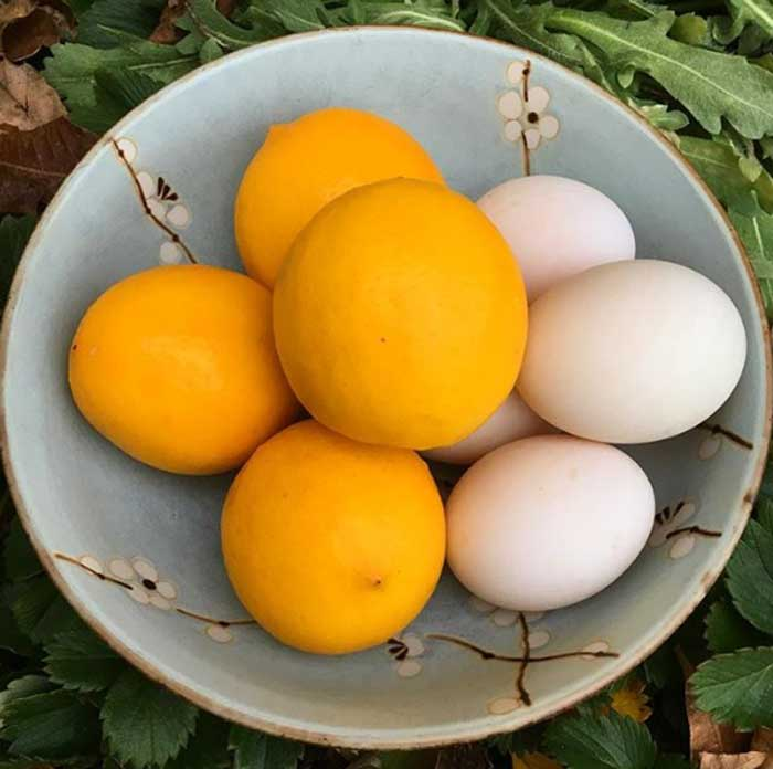 Our favorite thing to do with meyer lemons is make lemon curd, which uses both the zest and the juice of the fruit, along with ducks eggs from our back yard.