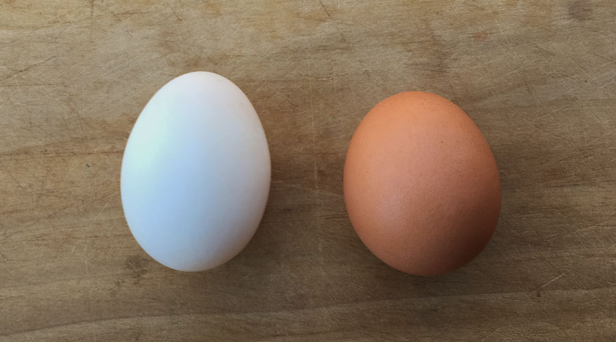 Duck eggs vs. chicken eggs: how do they compare? thumbnail