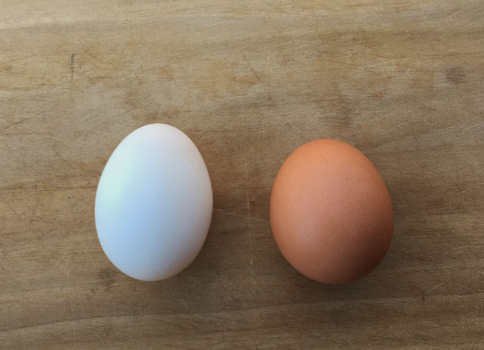 Duck egg (left) versus chicken egg (right). No matter whether you raise your own or buy them from a grocery store, please be a responsible omnivore and do your best to ensure that the animals producing your eggs are provided with an optimal existence. Duck eggs versus chicken eggs.