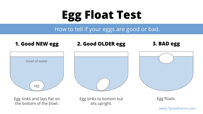 Egg float test: how to tell if eggs are good or bad.