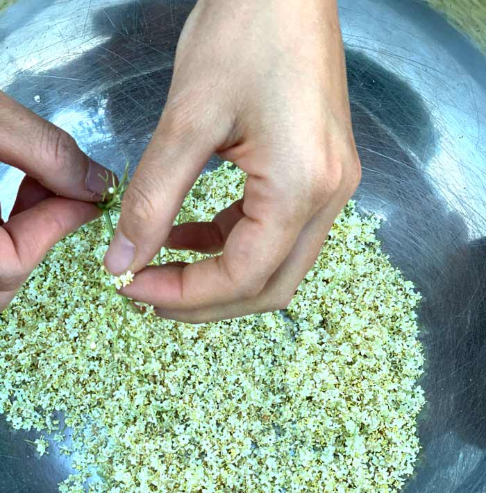 Processing elderflowers takes time, but it's totally worth it once you taste your creations!