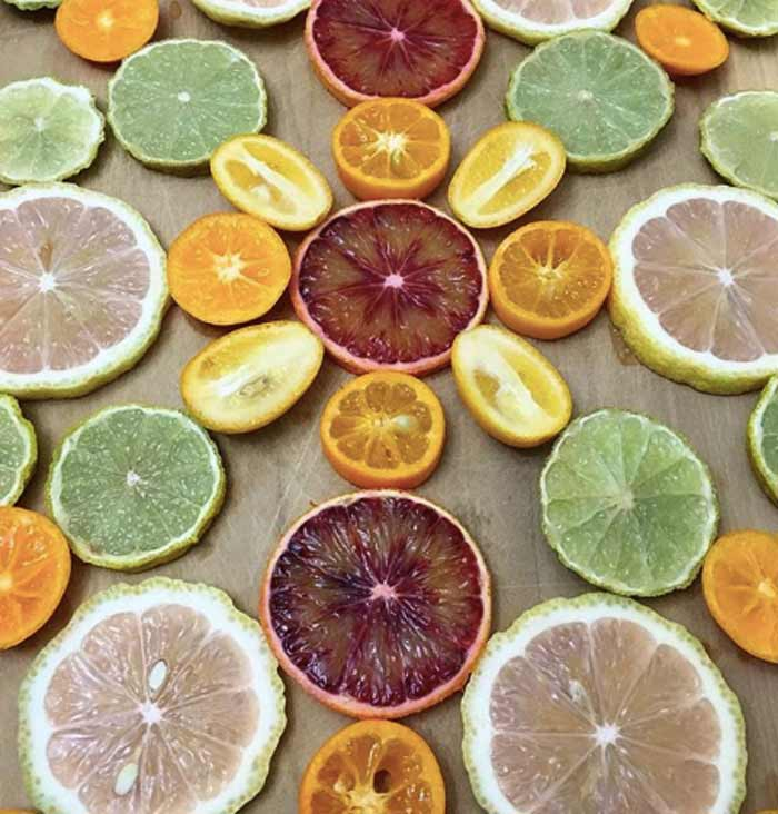 A beautiful array of fresh citrus varieties from our potted citrus plants, which produce the bulk of their fruit from fall through early spring.