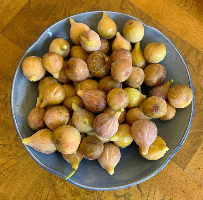 Brown turkey figs ready to be presented as an offering to The Tyrant.