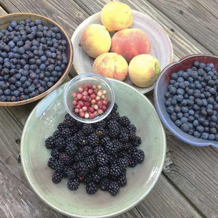 Yes, we live in a hot, humid climate chock full of pest insects and plant diseases, but we can also grow an incredible diversity of fruit year round here. Pictured: a summer harvest of blackberries, blueberries, peaches, and pink lemonade blueberries.