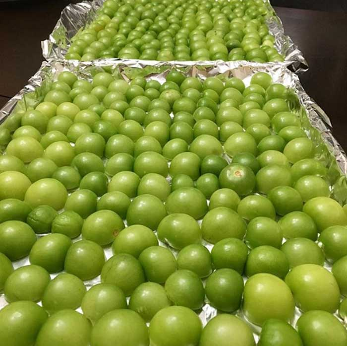 A beautiful summer harvest of tomatillos about to get oven-roasted for a sauce.
