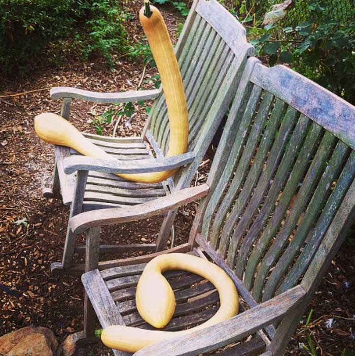 Hanging out on the rocking chairs next to the duck pond with two of our tromboncino squash.